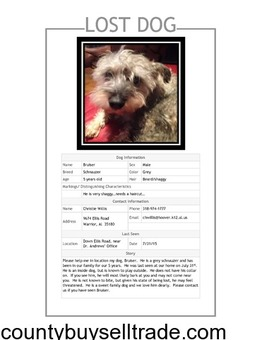 Lost Male Schnauzer-Warrior Area