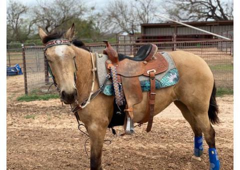 5Yr buckskin mare