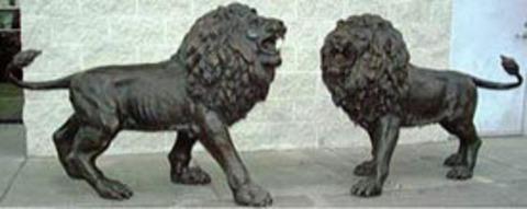 Magnificent Bronze Lions for Sale!